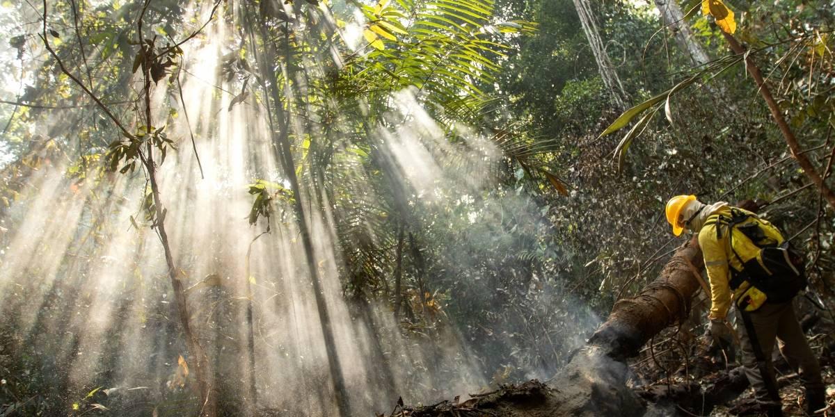"""La """"Amazonía es un gran recipiente de virus"""", dice investigador brasileño"""