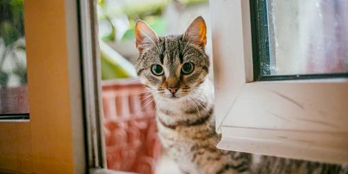 Científicos crean vacuna que cura la alergia a los gatos