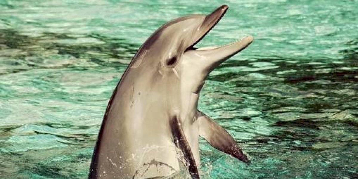 Era obligado a hacer cuatros shows al día: el triste final del delfín de apenas 9 días de vida que murió en pleno espectáculo en parque acuático