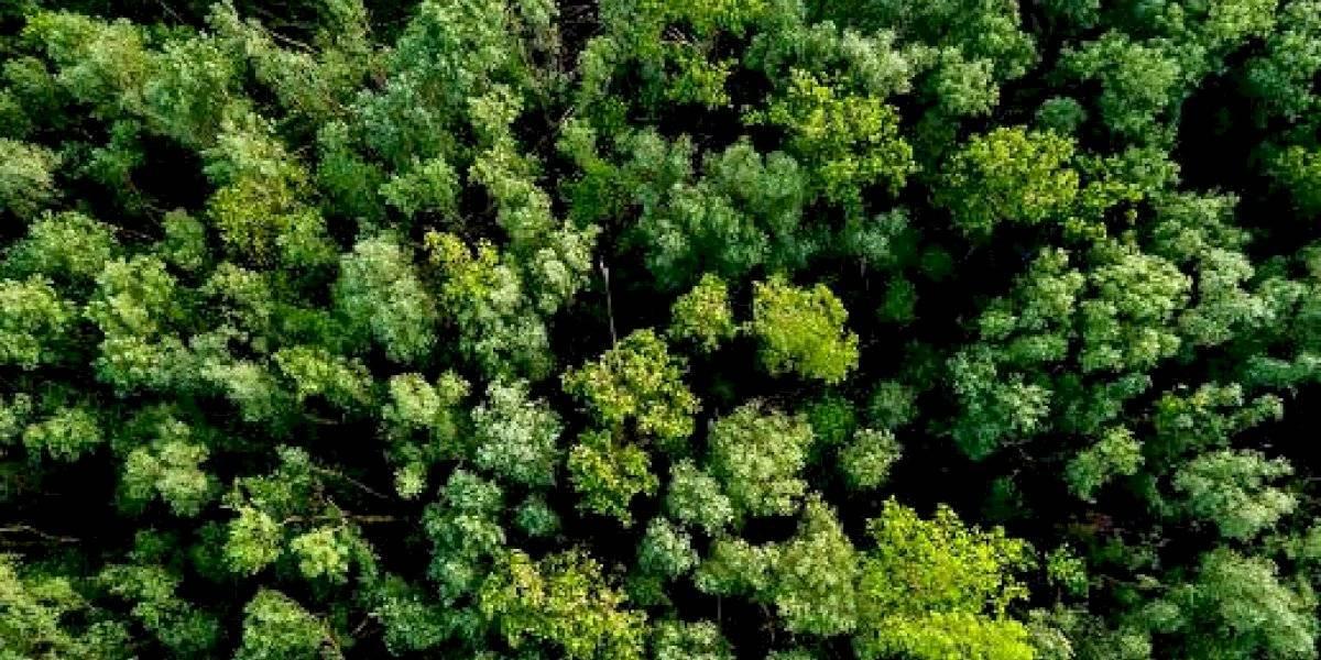 Video: La peculiar petición de ayuda de dos mujeres de 60 años pérdidas en una selva