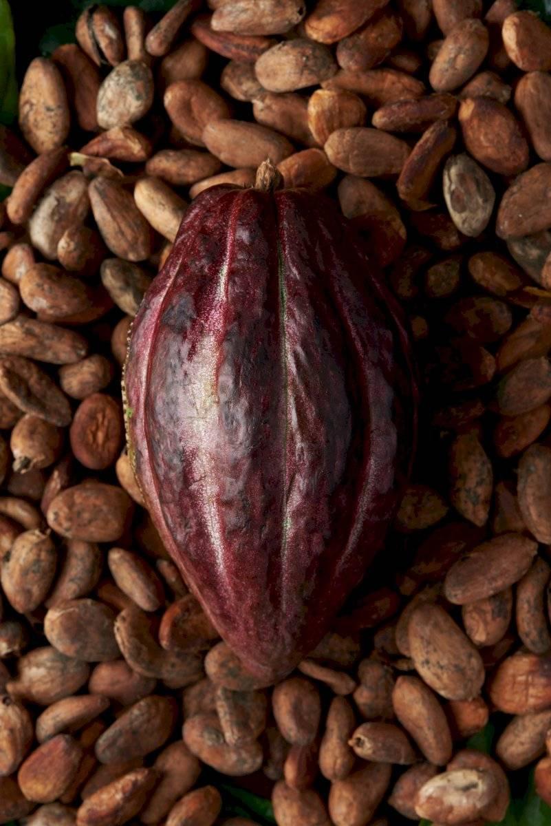 Celebran por primera vez el Día Nacional del Cacao y el Chocolate en México