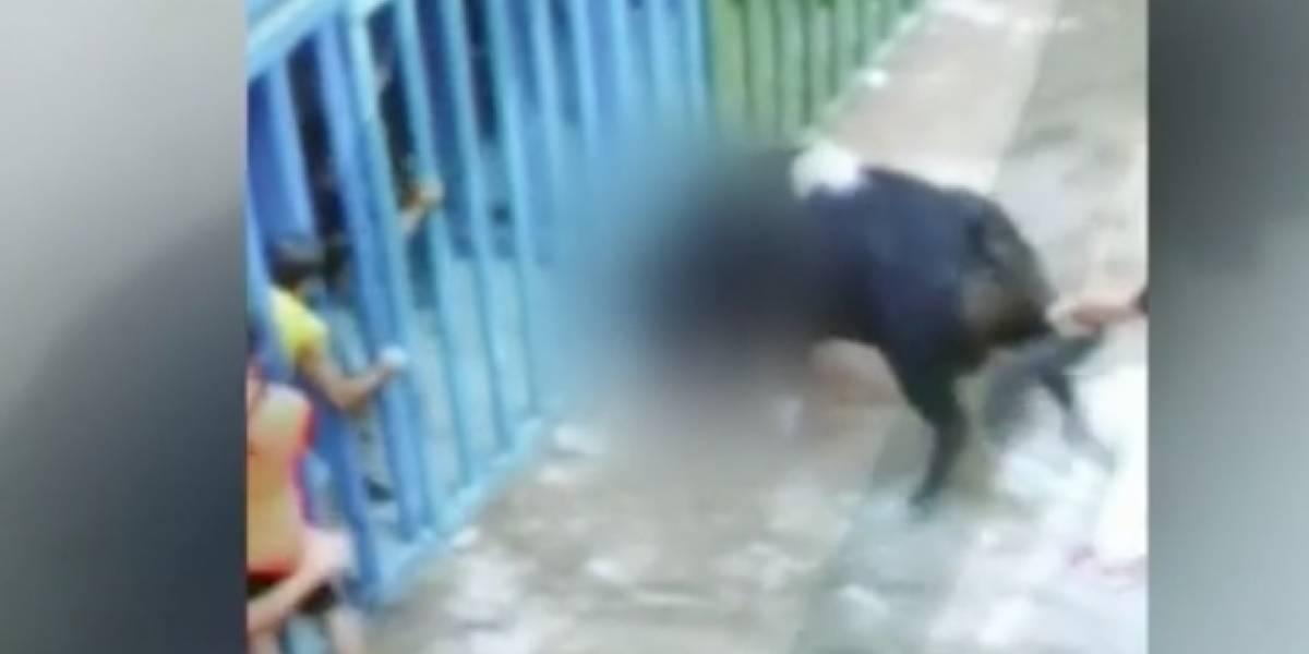 """Quería correr con las bestias y murió """"casi decapitado"""": el momento en que toro embiste a un hombre en medio de corrida en España"""