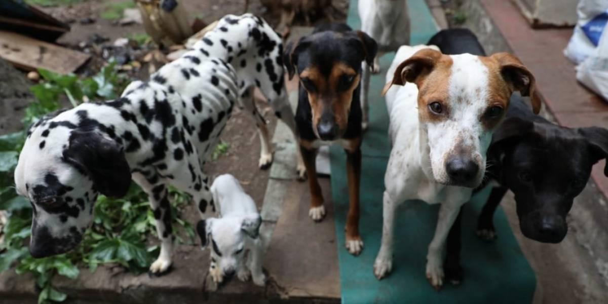 Rescatan en Bogotá a 13 perritos en terribles condiciones de salud