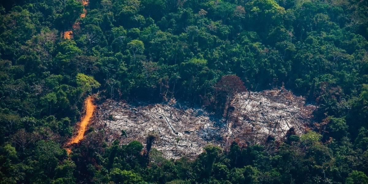 Científicos descubren el árbol más grande de la Amazonía