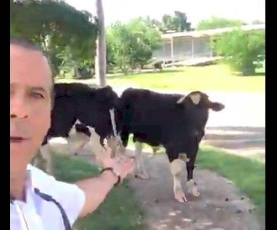 georgie vacas