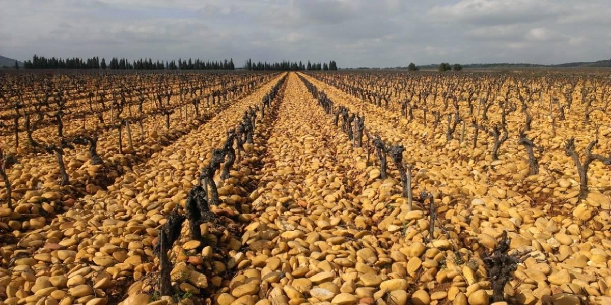Científicos crean condiciones para que cultivos resistan a tiempos prolongados de sequía