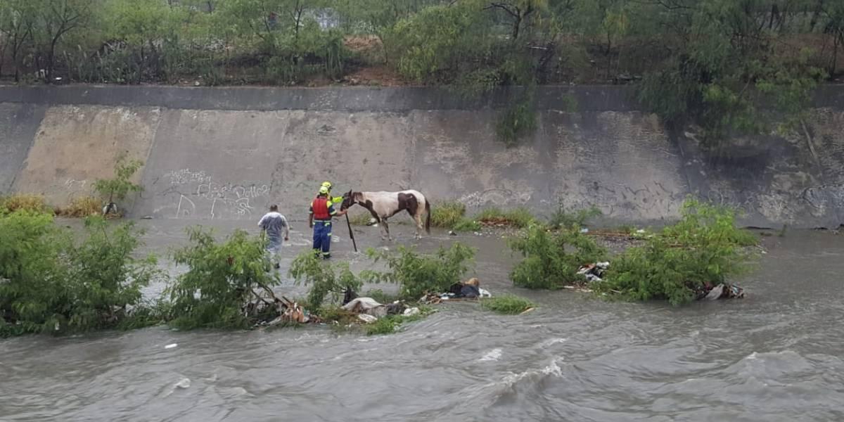 Rescatan a un caballo atrapado en la corriente del arroyo el Obispo