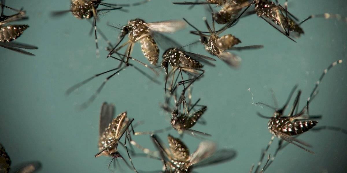 El temido virus del Zika puede causar complicaciones neurológicas en adultos