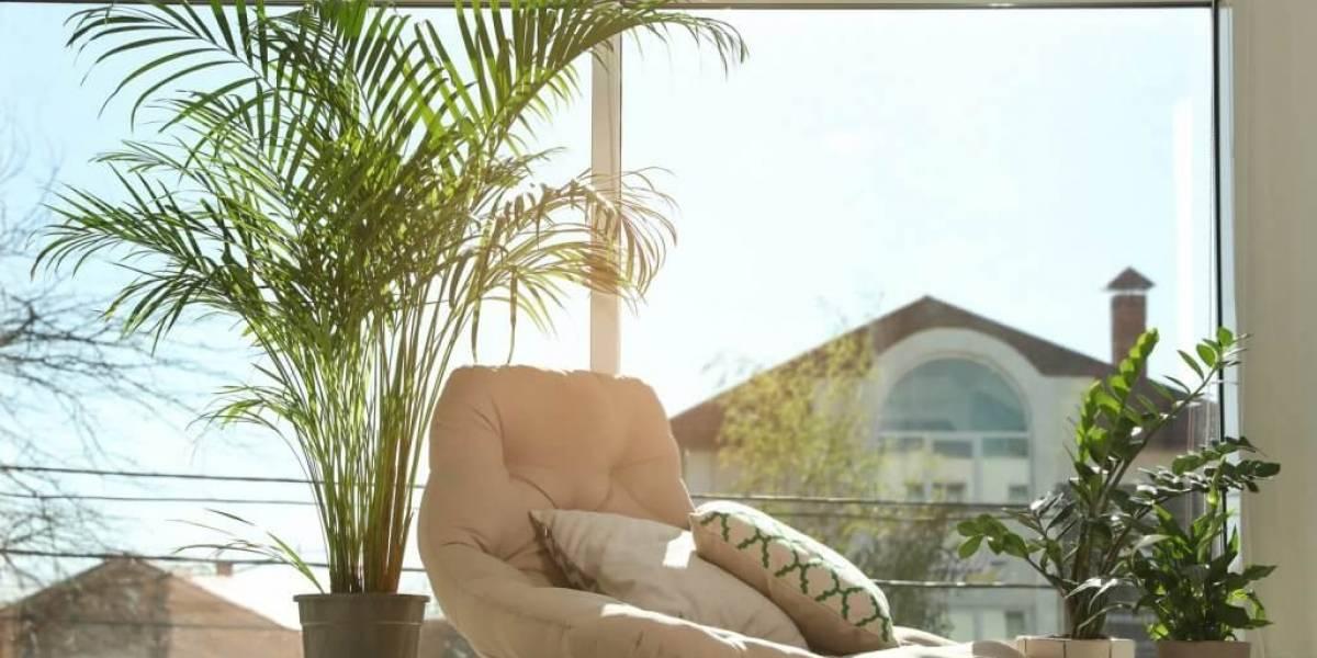 Limpeza energética purifica e protege a casa