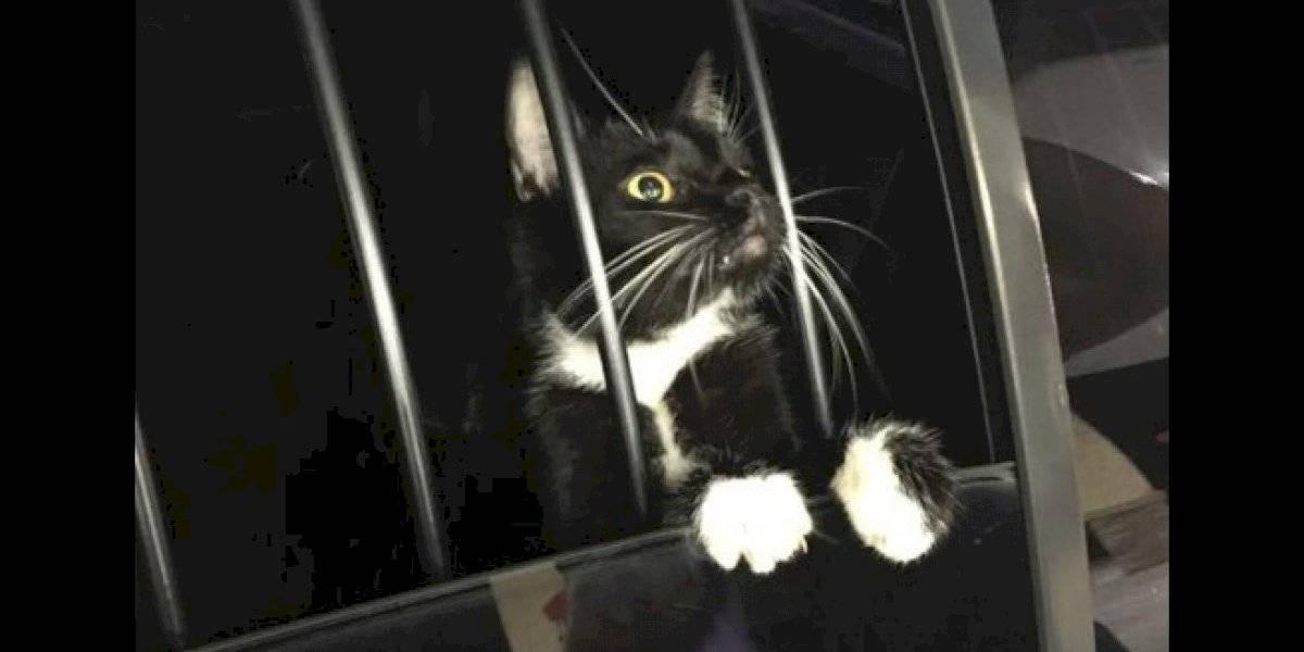 """Pidió un """"abogato"""": llamaron a la policía porque un """"intruso"""" estaba en su casa y cuando entraron sólo encontraron un lindo gatito"""
