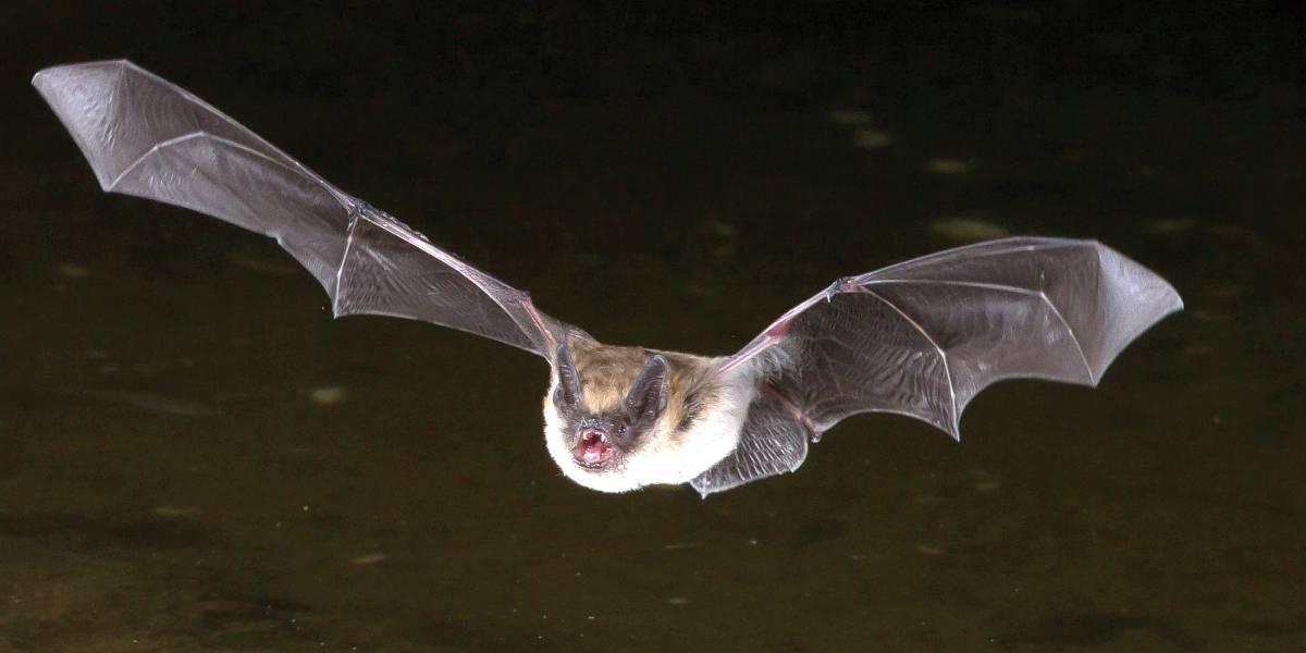 Adolescente contrai raiva e morre após ser mordido por morcego no RJ