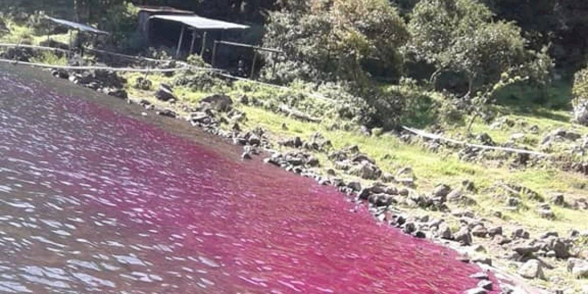 ¡Se tiñe de rosado! Sorprendente fenómeno en laguna del volcán de Ipala