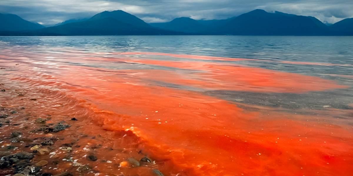 Científicos de Japón llegaron a Chile para presentar proyecto de detección para marea roja