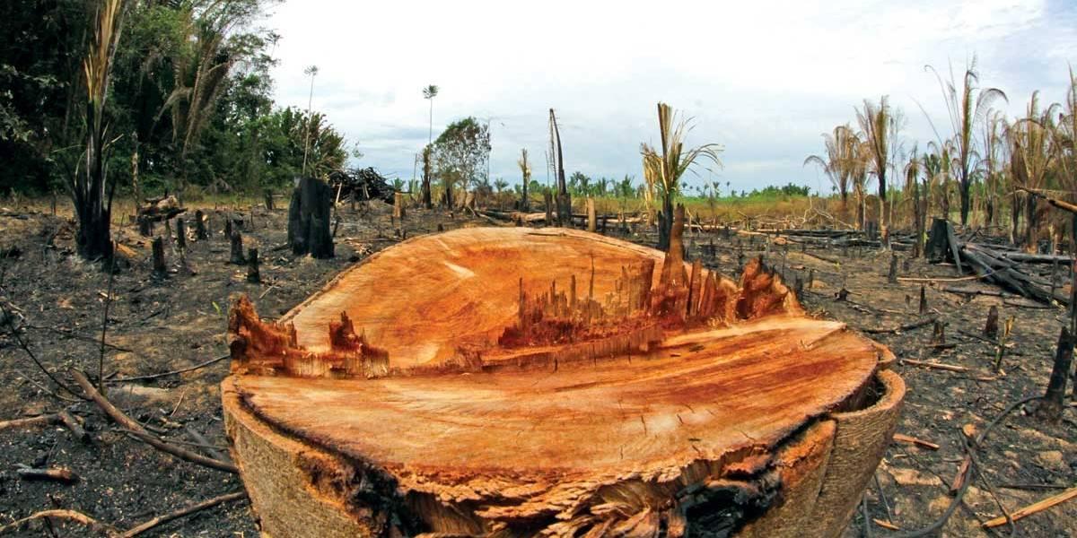 Desmatamento na Amazônia cresceu 212% em outubro, diz Imazon