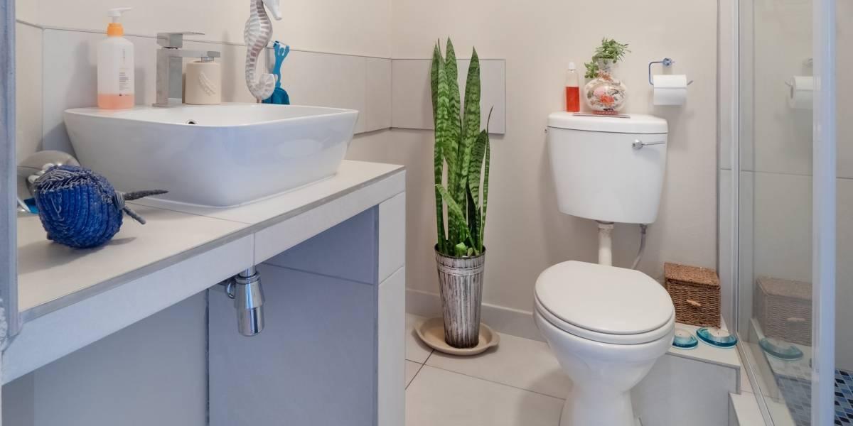 Dica perfeita para deixar o banheiro limpo e cheiroso rapidamente