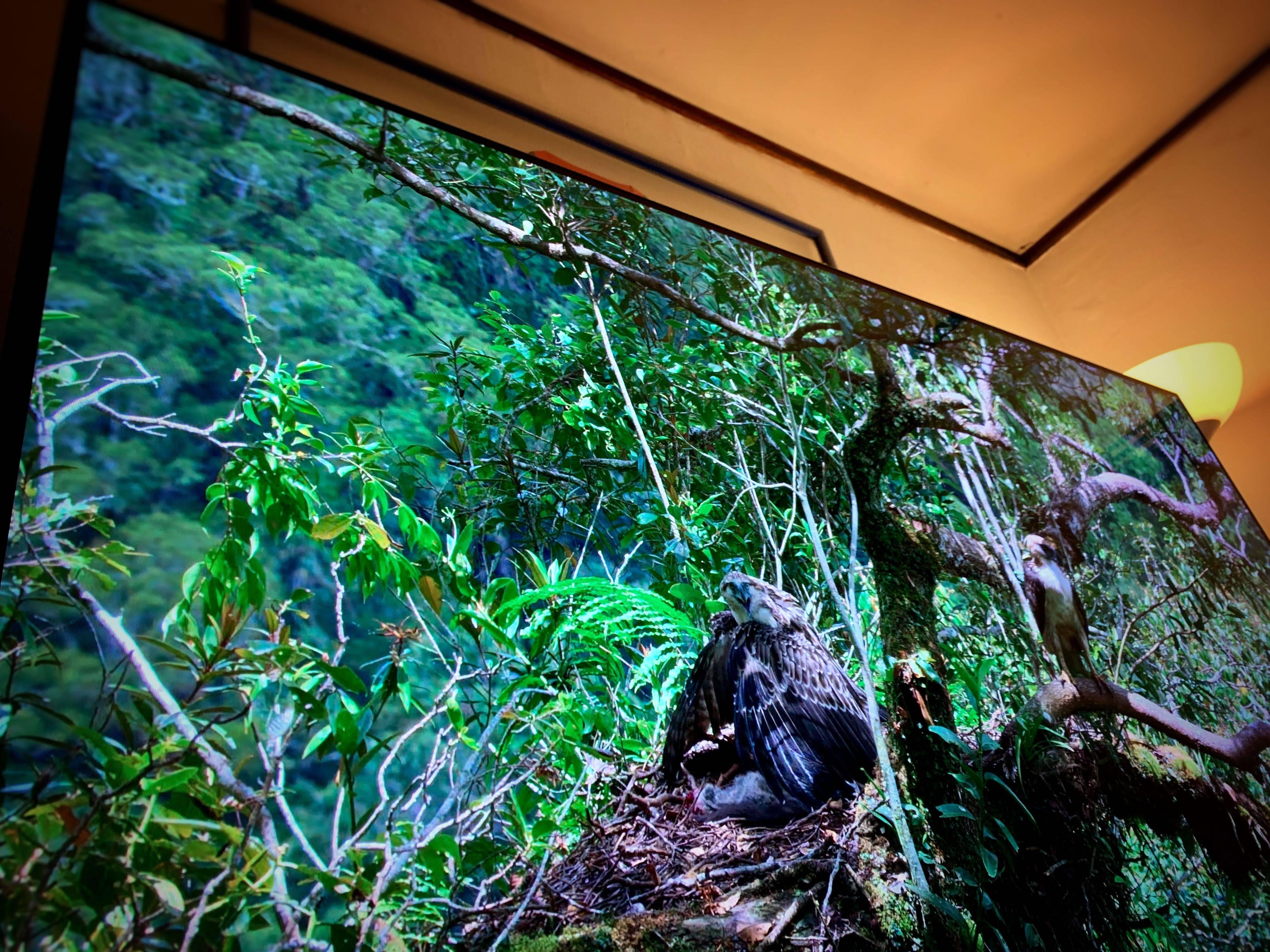 TV Sony Bravia A8G