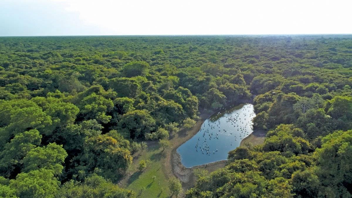 pantanal tesouro verde