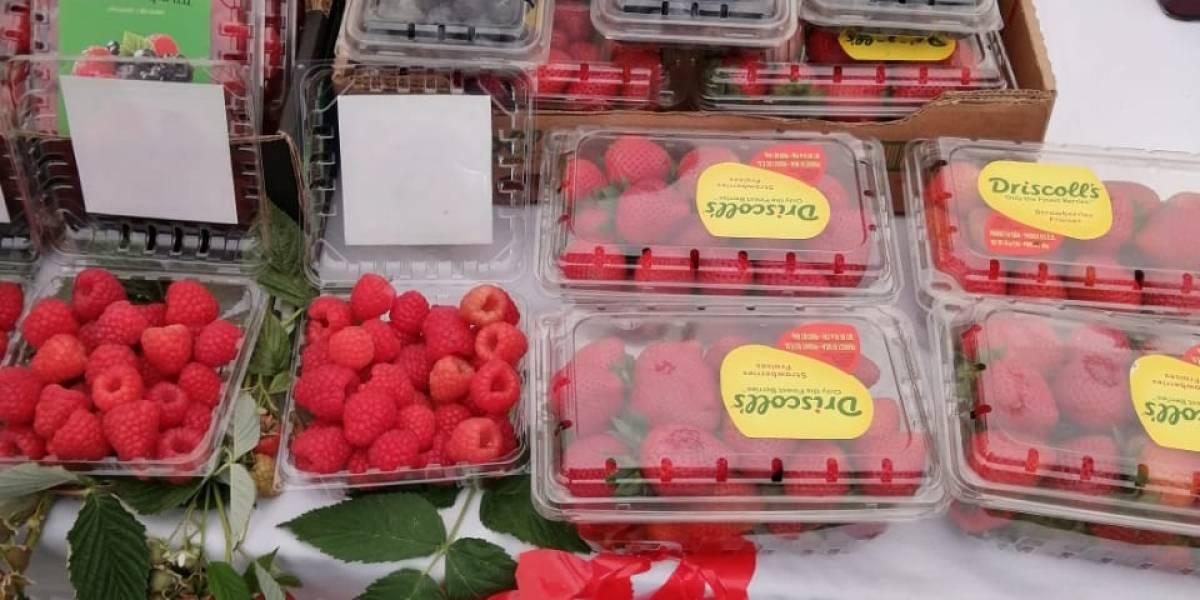 Inauguran en Huejotzingo Feria de berries; esperan derrama de un millón de pesos
