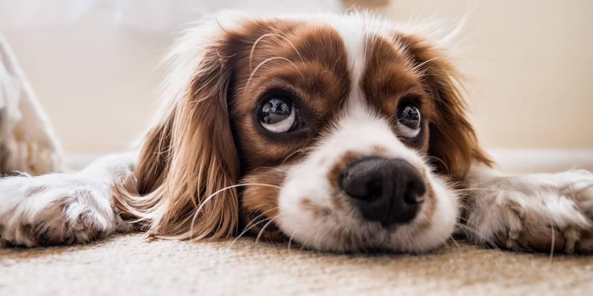 Una extraña enfermedad está matando a los perros — Terror en Noruega