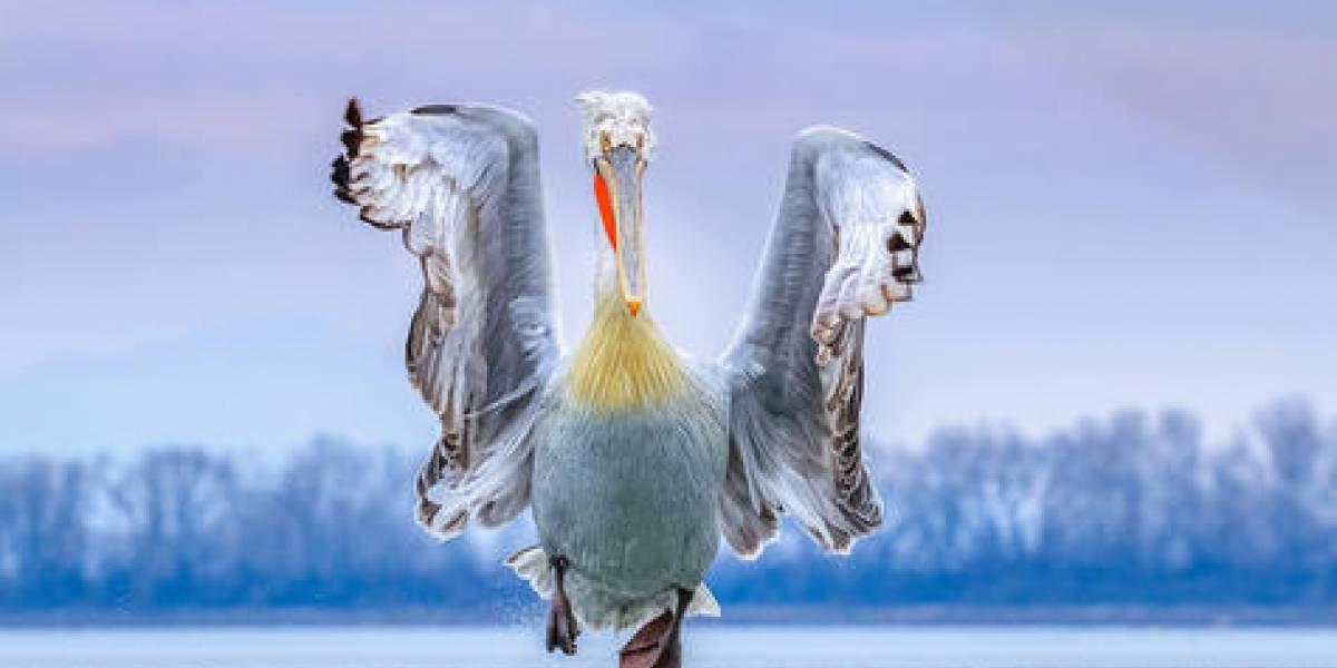 Las mejores fotos de aves de 2019