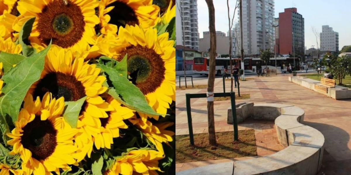 Setembro Amarelo: campanha monta labirinto de girassóis no Largo da Batata