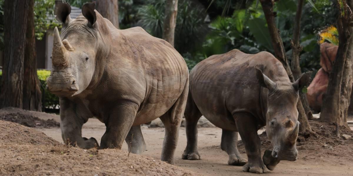 Zoológico La Aurora permanecerá cerrado hasta nuevo aviso
