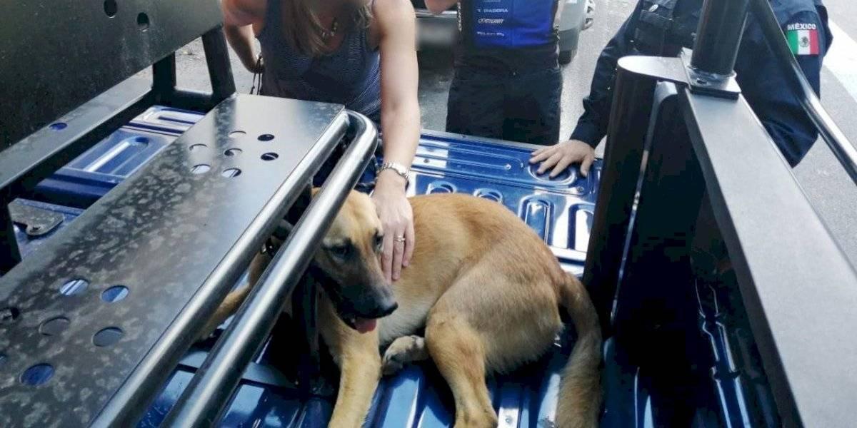 Rescatan a mascota de la embajadora del Reino Unido en México