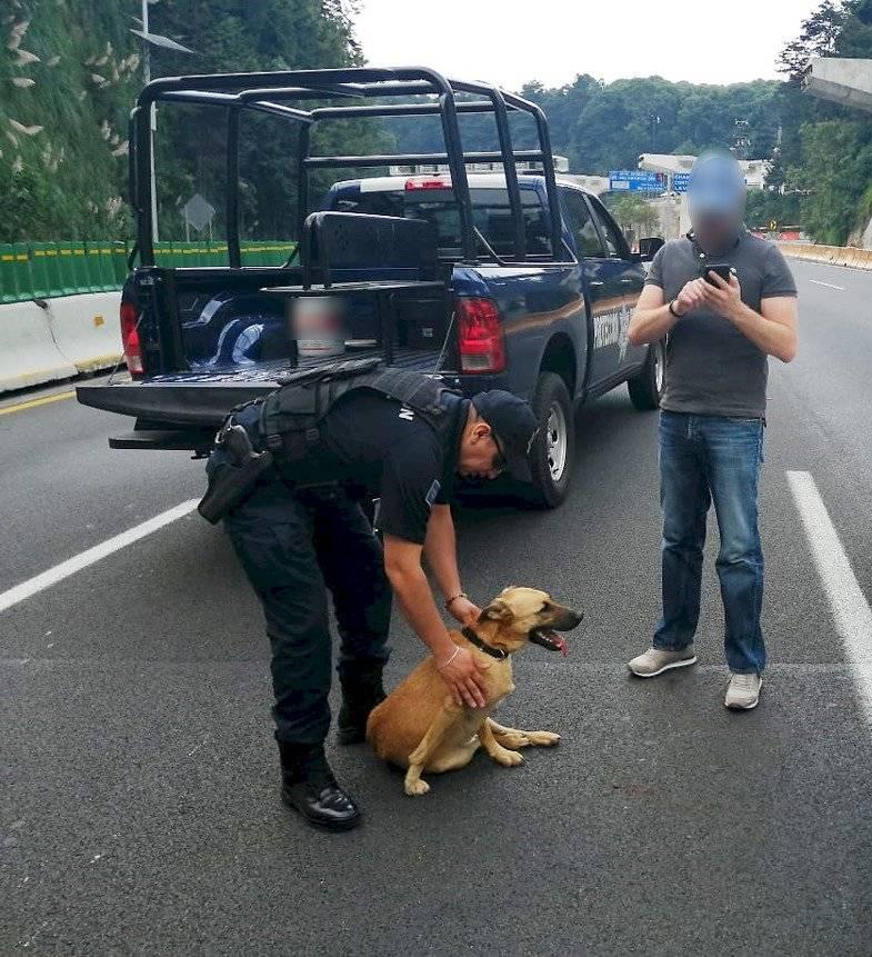 Perro embajadora