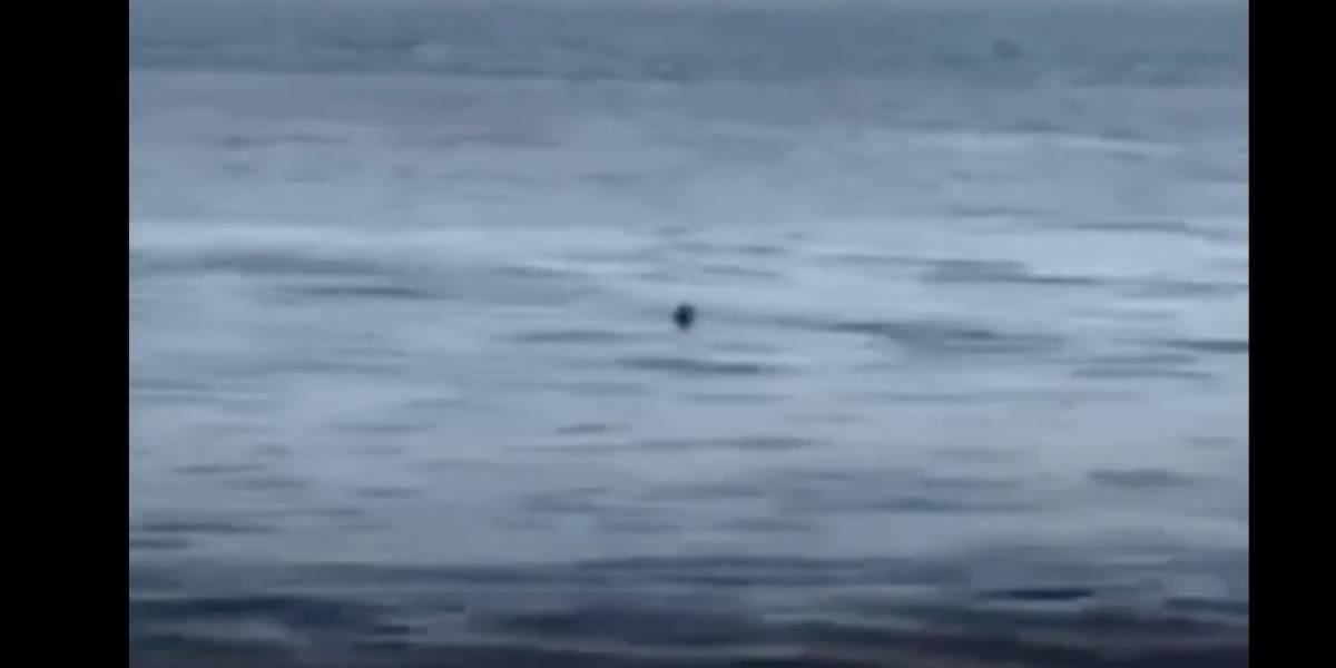 Avistan tiburón en la costa de Mayagüez