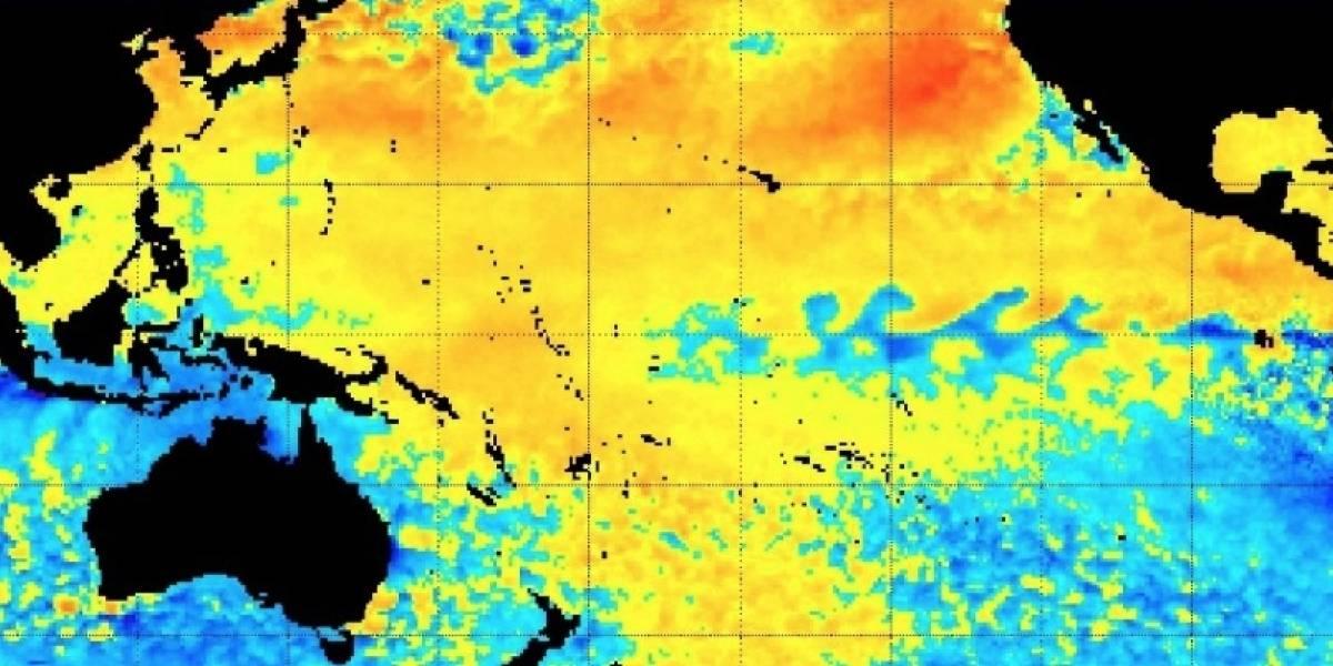 Gigantesca ola de calor oceánica alerta al mundo: anomalía térmica que asesinó a millones de especies marinas vuelve a amenazar al Pacífico