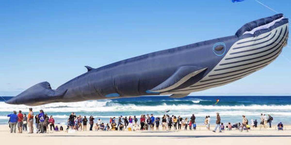 Enormes animales de plástico sobrevuelan Sidney