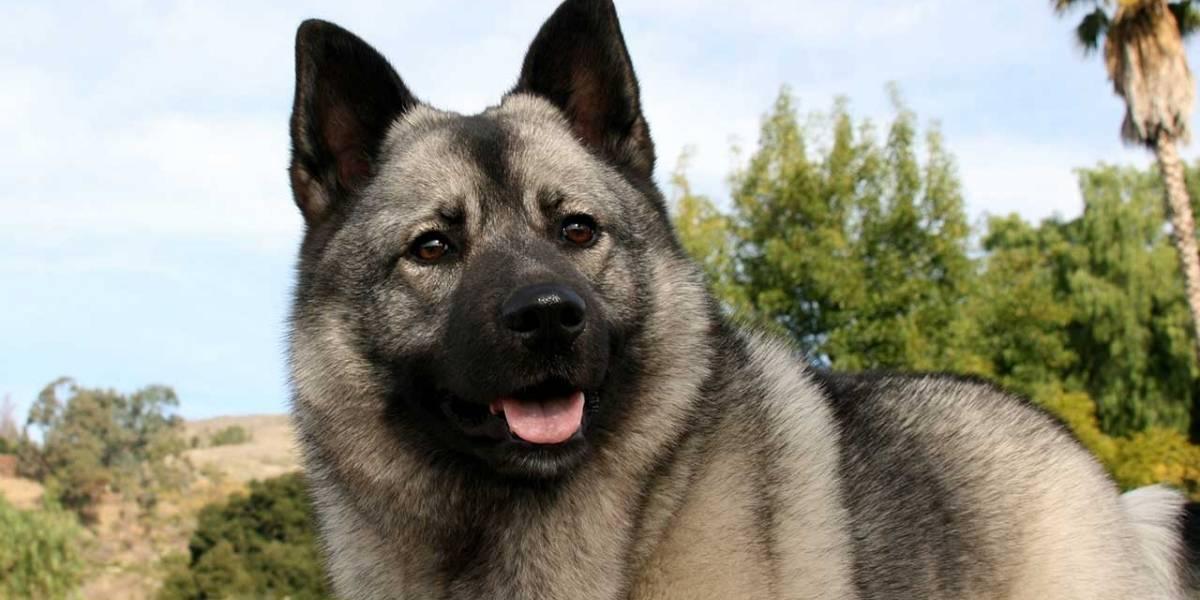 Noruega: Crece preocupación por misteriosa enfermedad que está matando a los perros