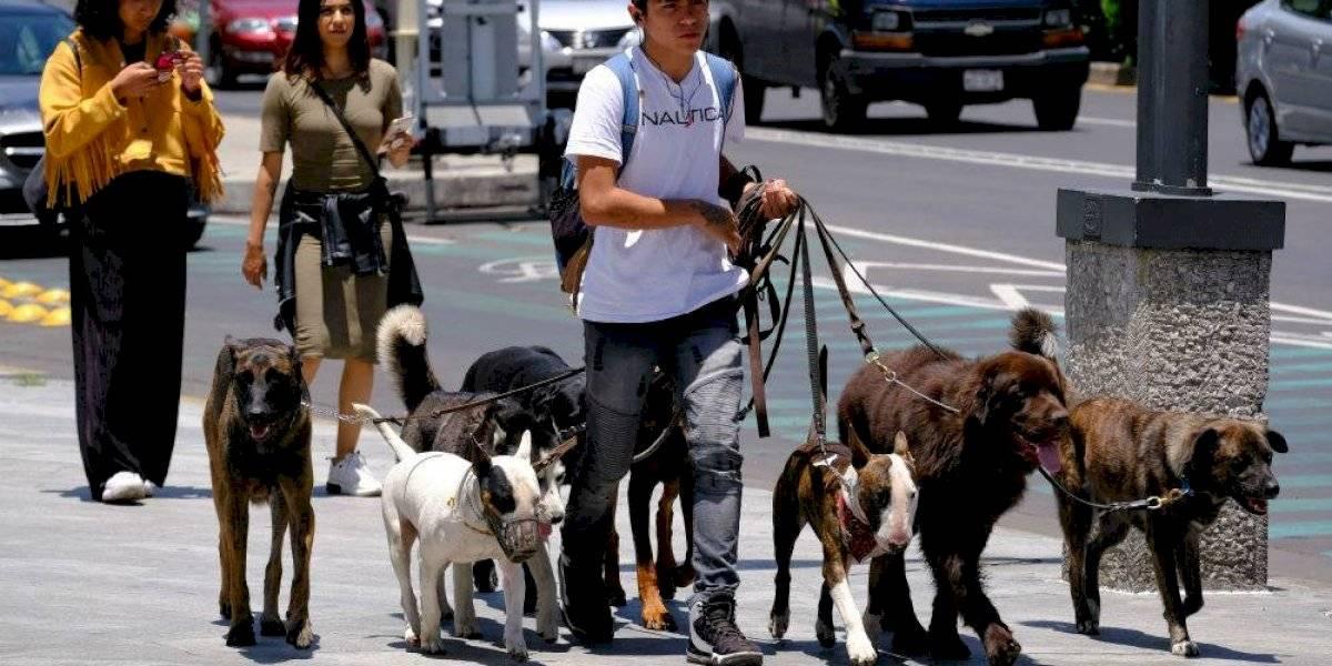 Habrá un día para pasear a mascotas en la CDMX