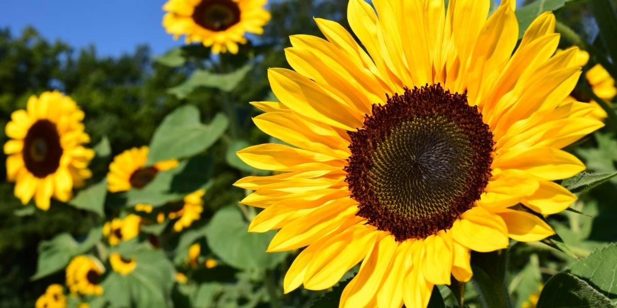 Setembro Amarelo: saiba como ajudar uma pessoa que pode estar pensando em suicídio