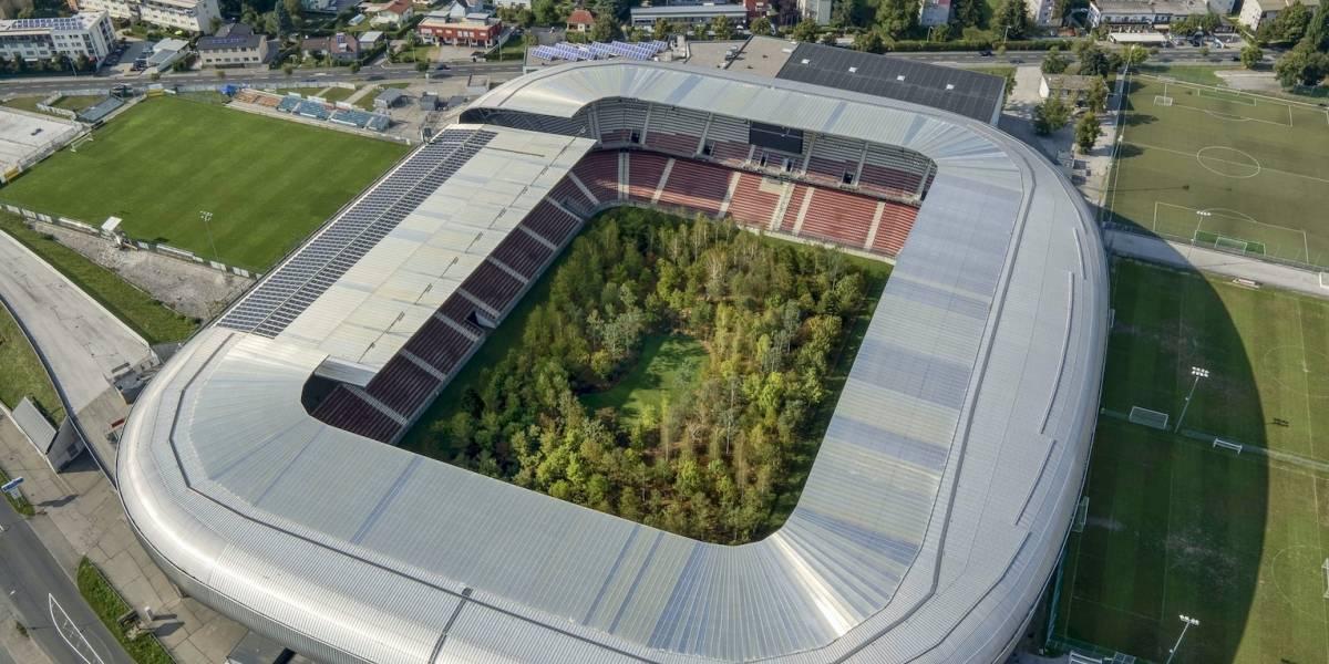 Un bosque real fue trasladado a un estadio de fútbol