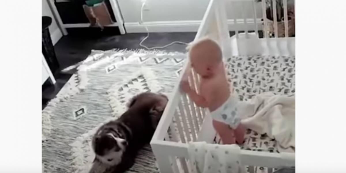 (video) Cámara de seguridad muestra lo que hace un perro cuando el bebé comienza a llorar