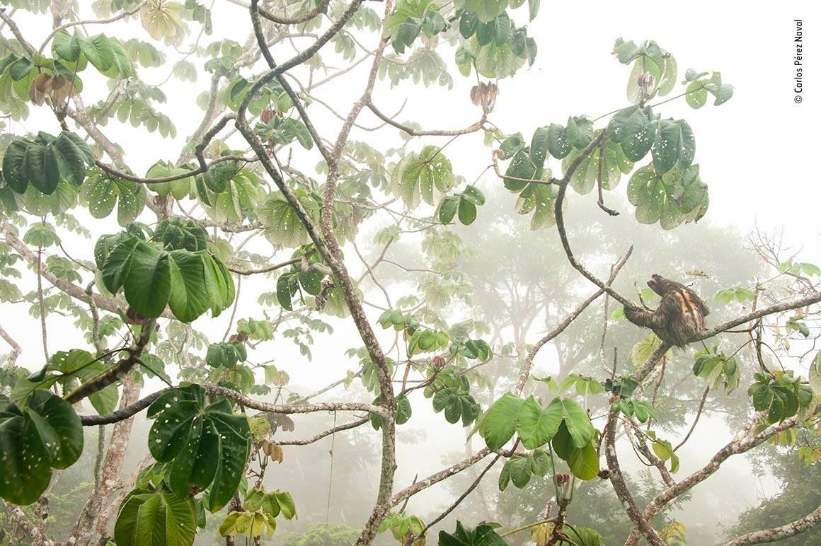 Canopy Hangout