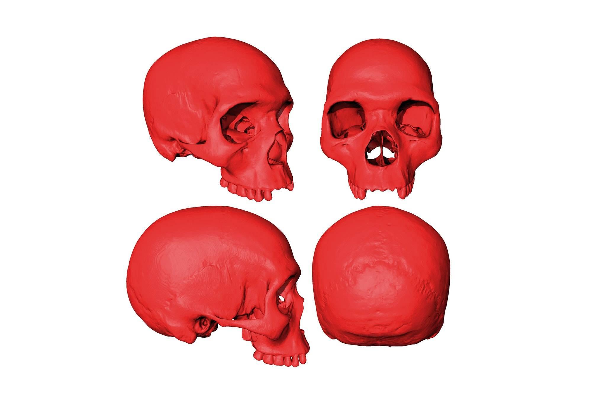 Científicos recrean cráneo del ancestro del Homo Sapiens en una computadora