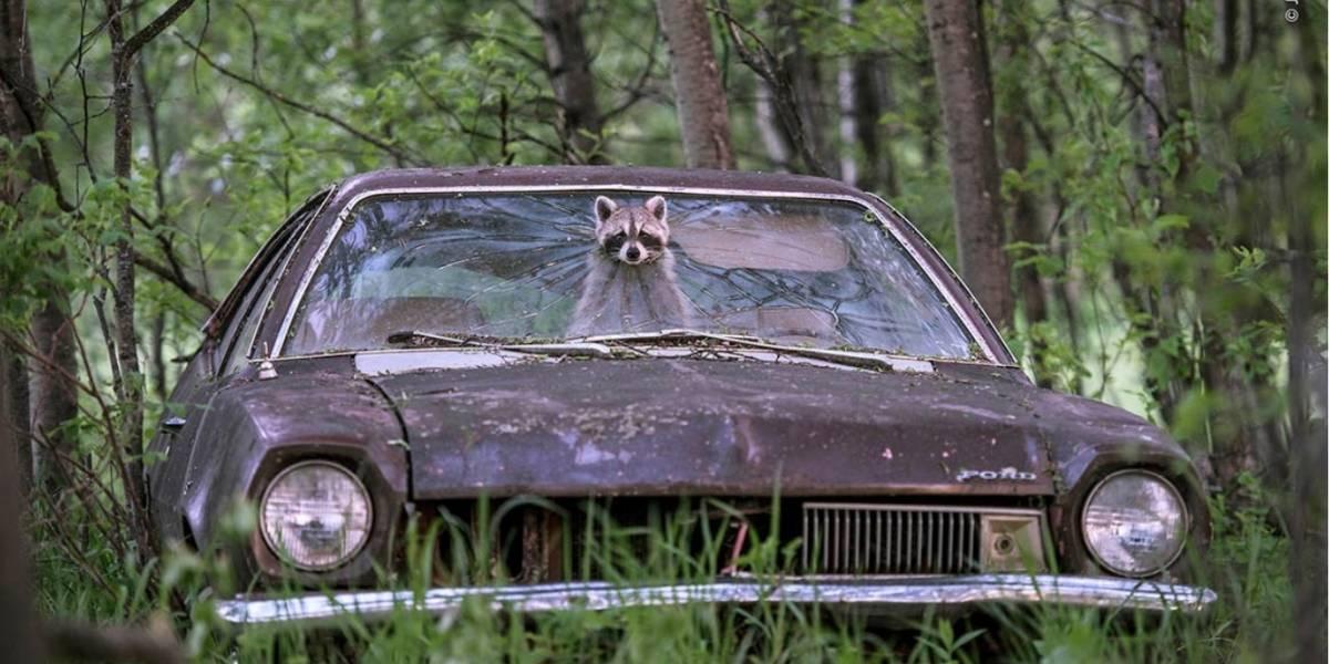 Observa los increíbles finalistas del concurso a mejor fotografía de vida salvaje del 2019