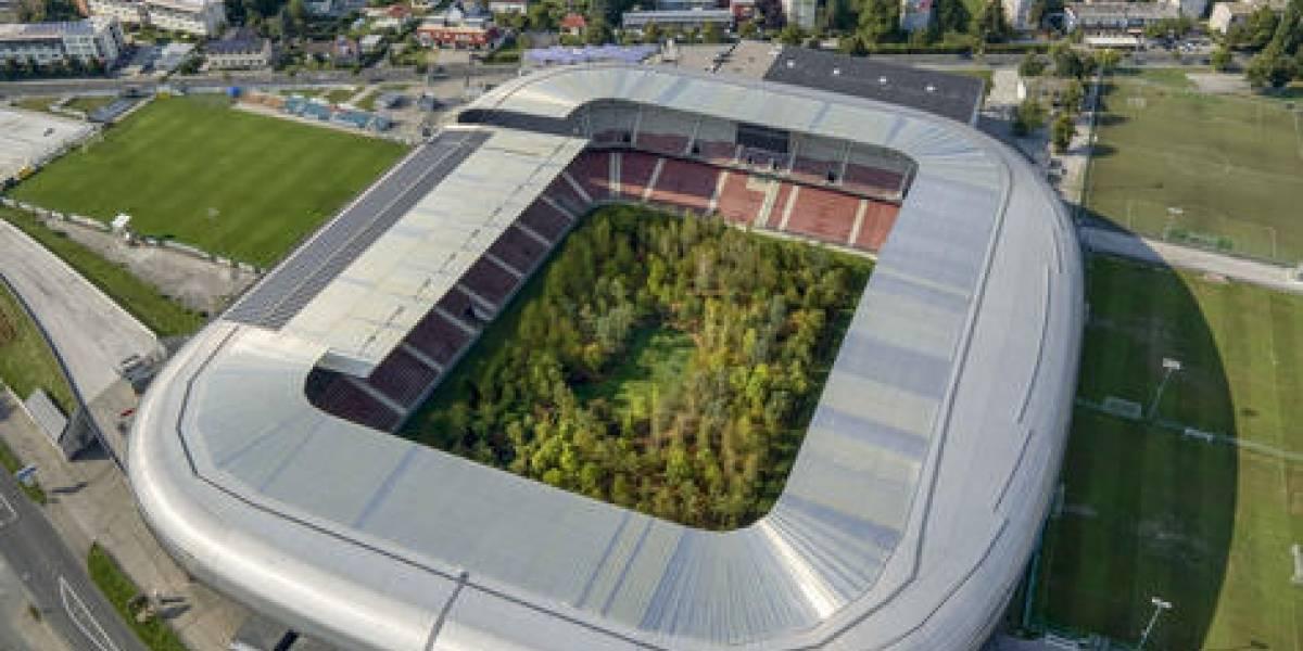 Un bosque fue trasladado a un estadio de fútbol