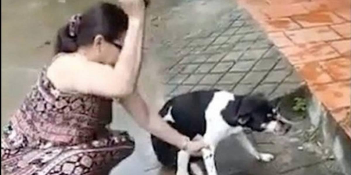 ¡Indignante! Una mujer le cortó la pata a su perra mientras su marido la filmaba