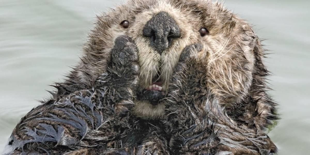 Son todas unas ternuritas: estos son algunos de los finalistas Comedy Wildlife Photography Awards 2019