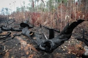 Las desgarradoras imágenes que dejaron los incendios en el amazonas