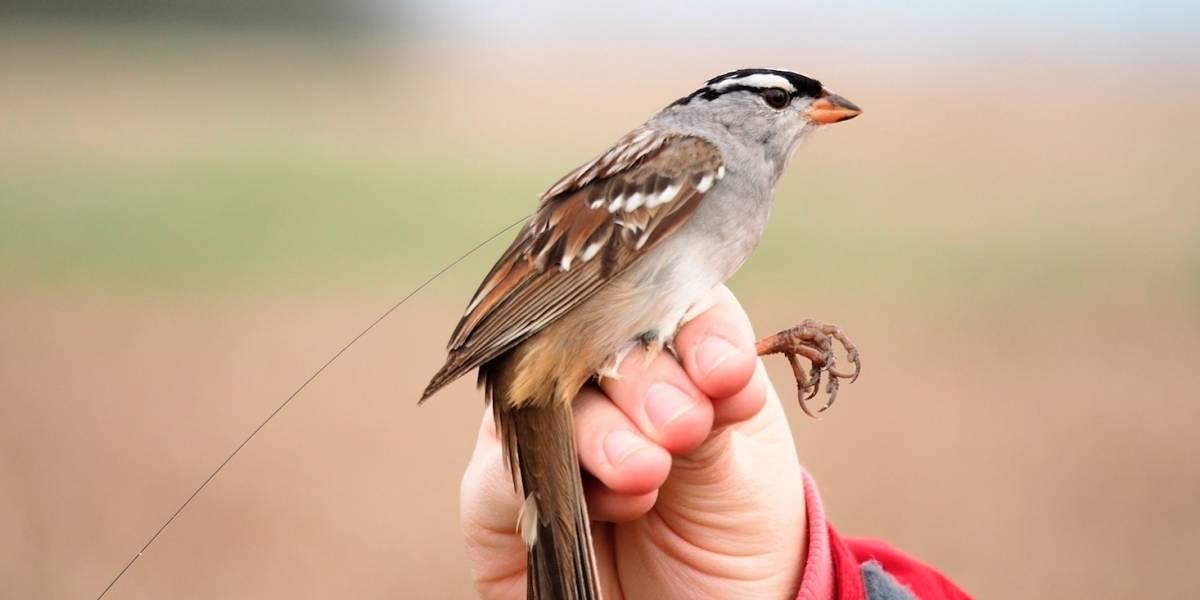 Pesticida ampliamente usado podría afectar aves migratorias