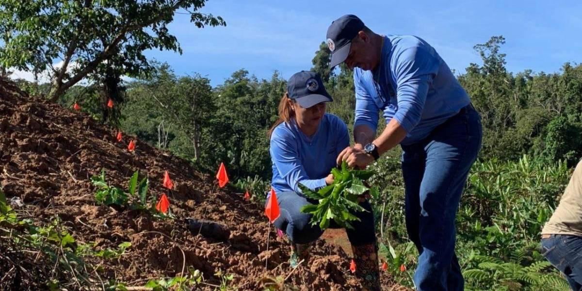 Siembran sobre 4,500 árboles de café