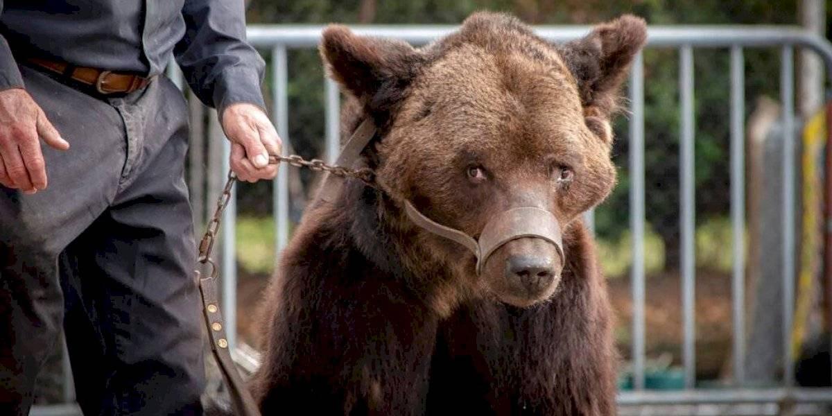 Impacto en China: trabajador de zoológico fue atacado mortalmente por osos frente a bus turístico