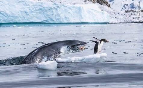 Si los pingüinos pudieran volar