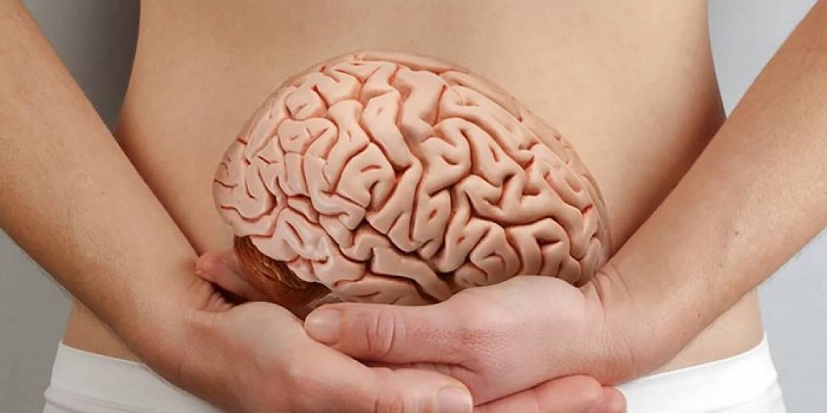 Alimentos para melhorar a memória: cuide de seu cérebro
