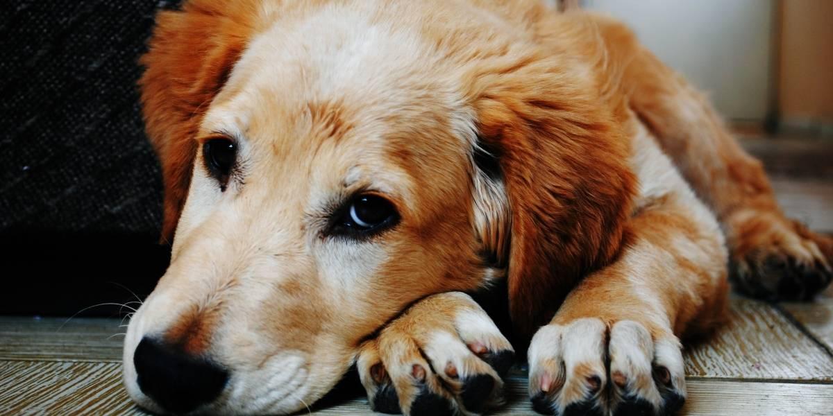 Reformas al COIP: Se endurecen las sanciones para el maltrato animal