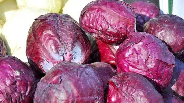 El repollo morado es un excelente alimento para combatir el cáncer de mama